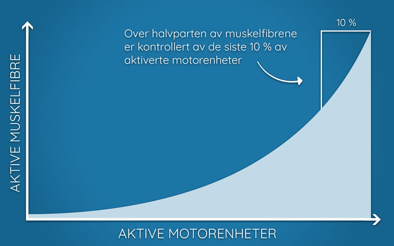 Illustrasjon over antall muskelfibre knyttet til motoriske enheter
