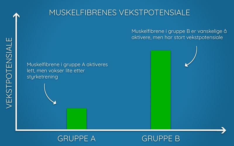 Illustrasjon av muskelfibrenes vekstpotensiale