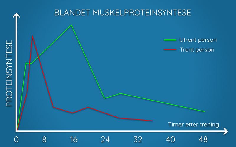 Illustrasjon av blandet muskelproteinsyntese hos trente og utrente personer